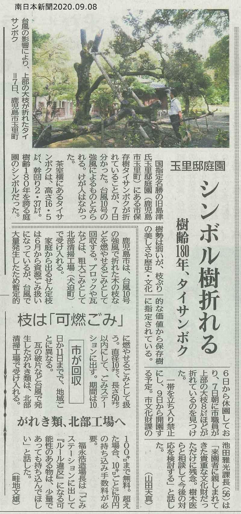 玉里邸庭園シンボル樹折れる_南日本新聞2020.09.08
